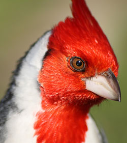 cardenal-vicario_franciso-i